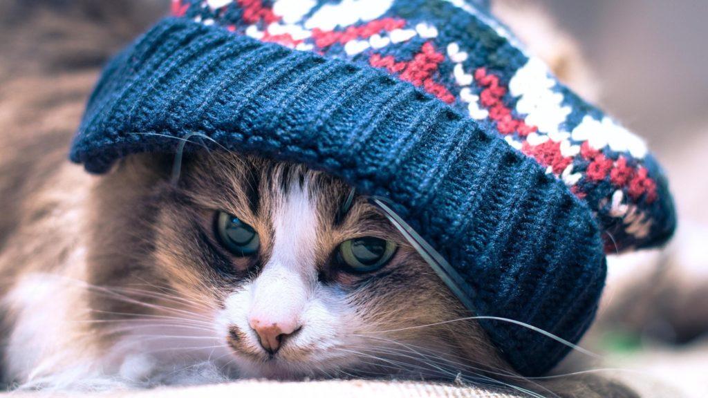 Доказана возможность передачи коронавируса между кошками
