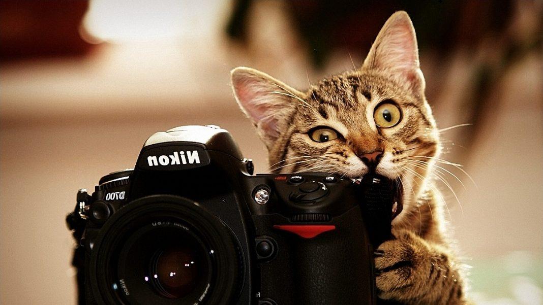Яндекс назвал самые популярные фотокамеры в России