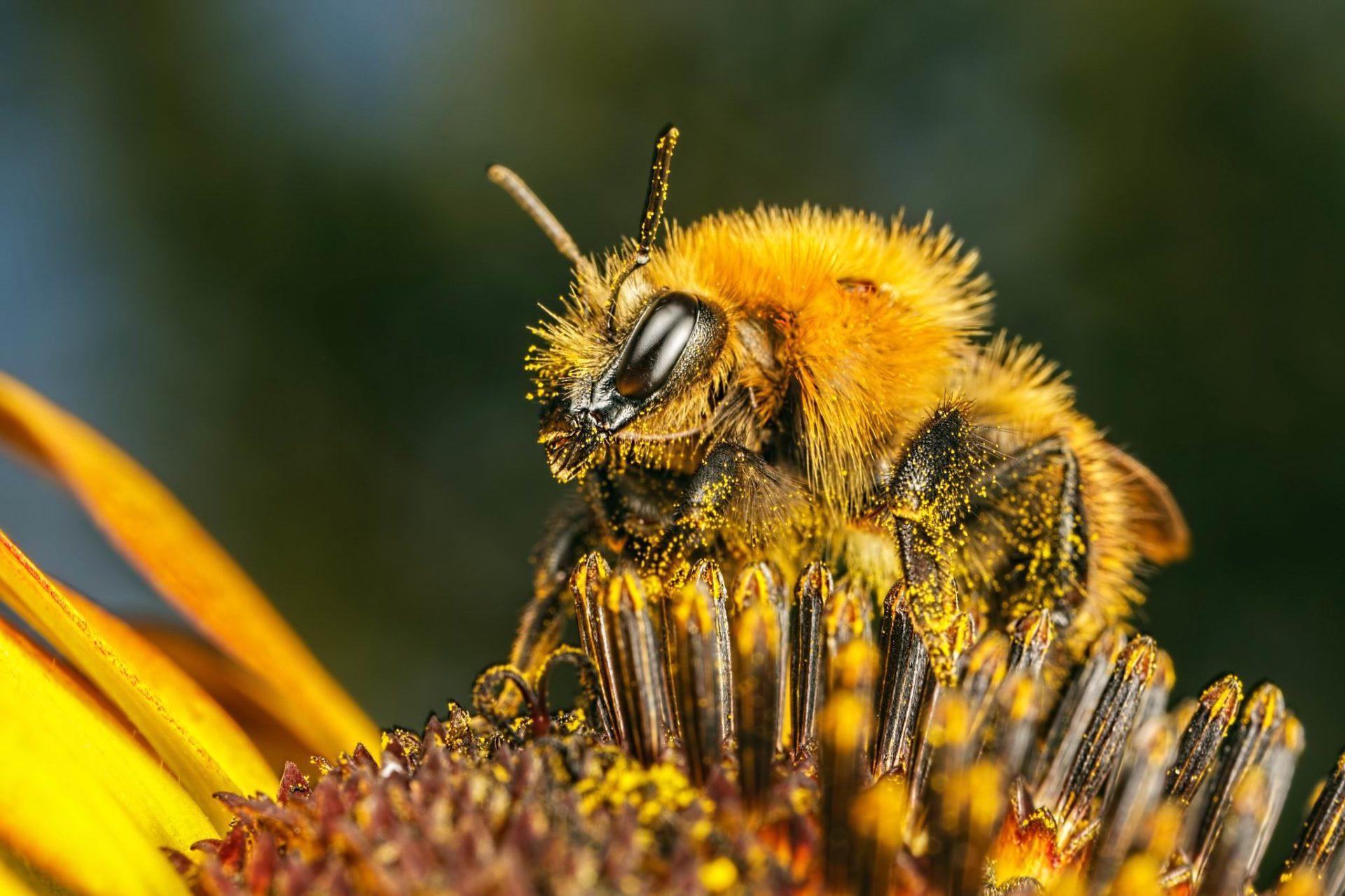 Цветы выделяют больше аромата после посещения пчел
