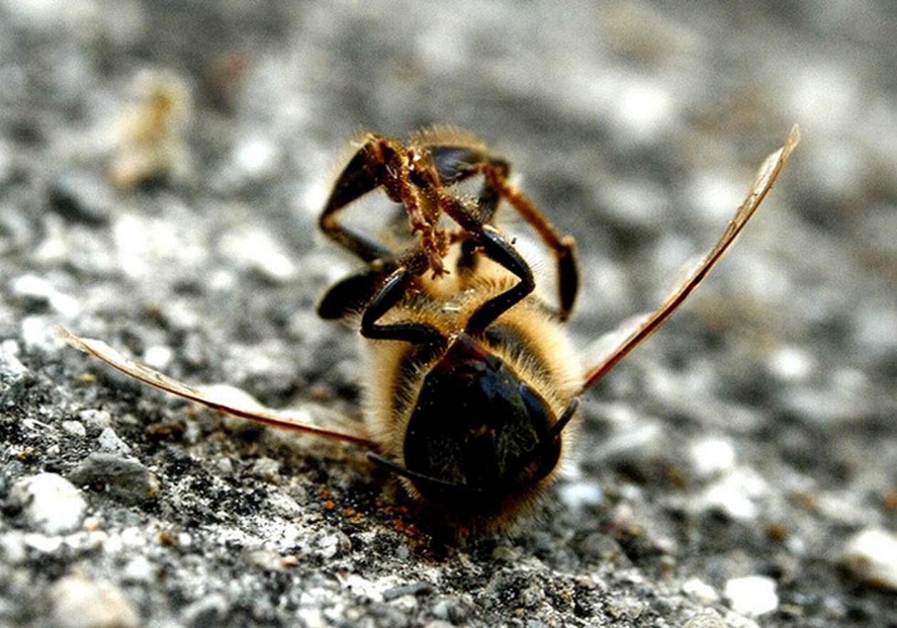 «Запах страха» пугает насекомых-вредителей и не наносит вред, как пестициды