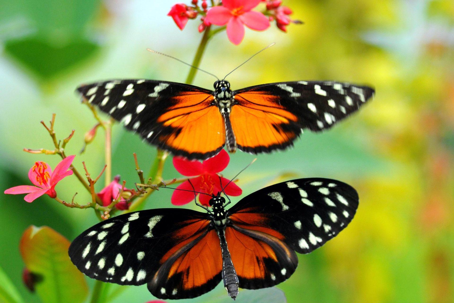 Способность бабочек создавать реактивную тягу хотят применить в конструкции дронов