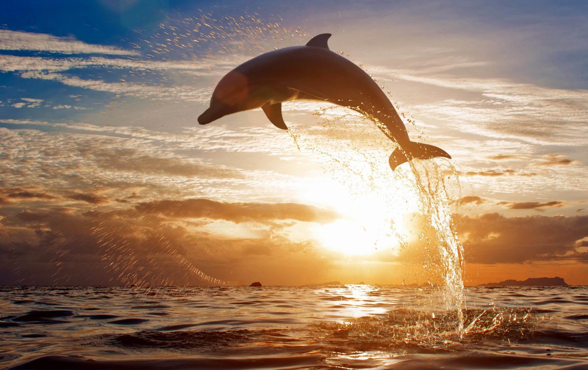 Свистящие языки людей помогут в расшифровке речи дельфинов