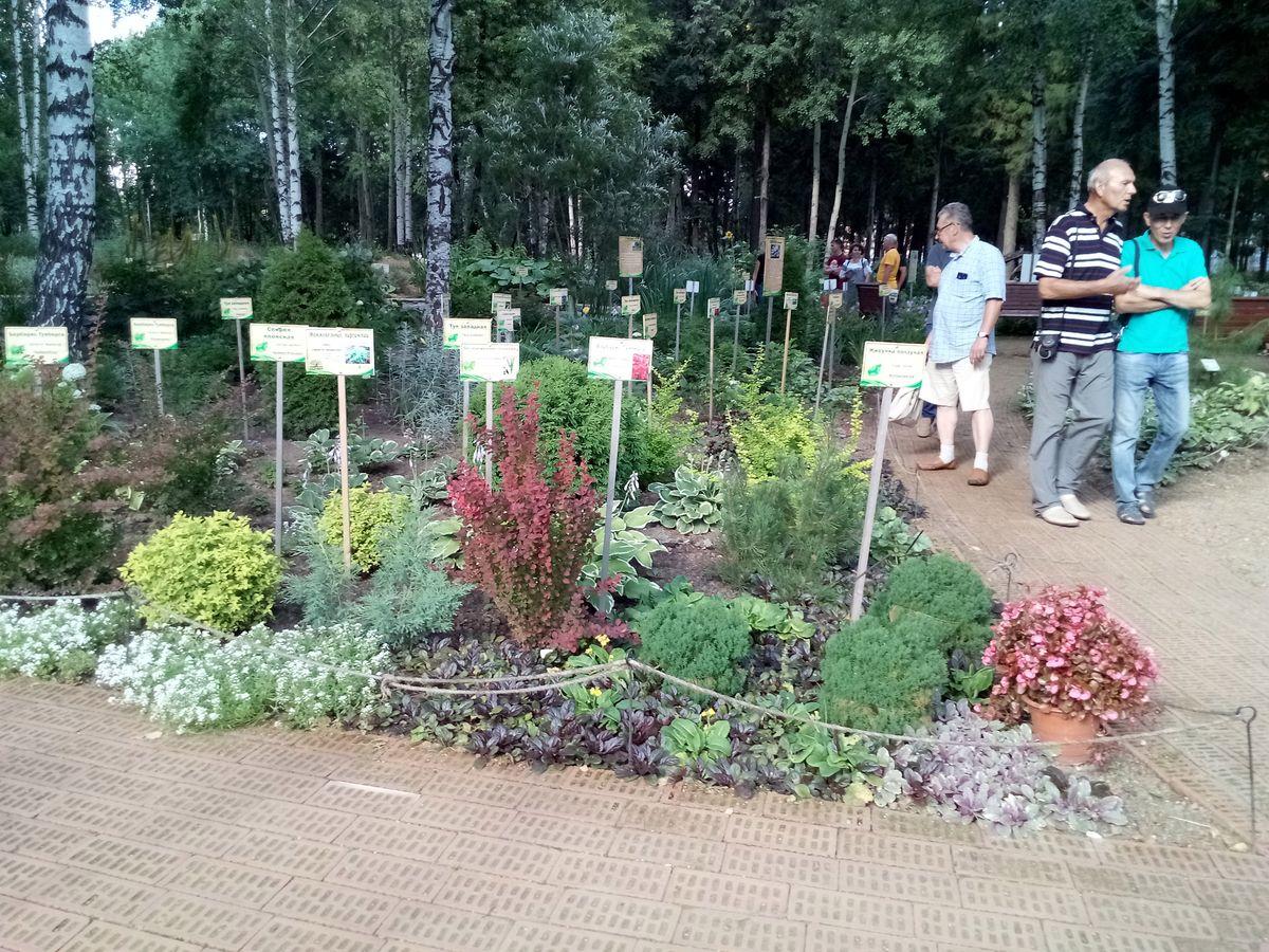 В Йошкар-Оле в Ботаническом саду раздают бесплатно крупные растения