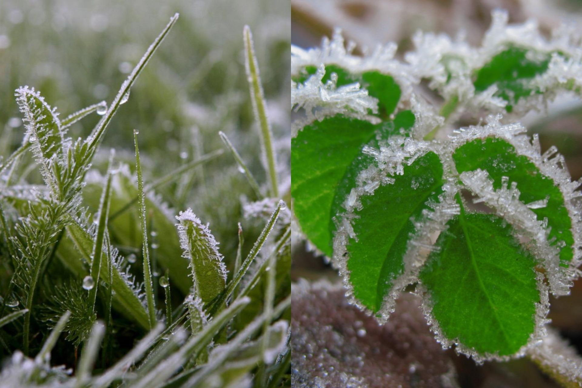 Синоптики обещают в Марий Эл заморозки до -1 градуса