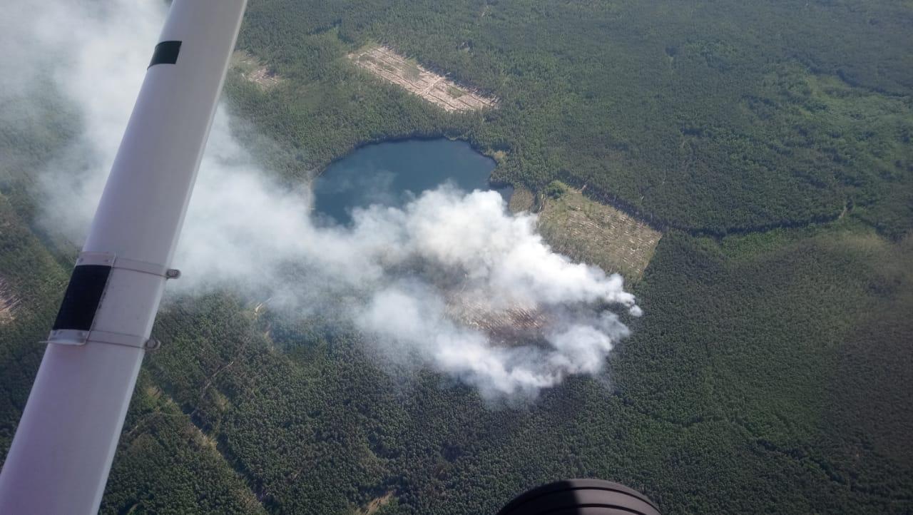 В Марий Эл произошел 21 лесной пожар с начала пожароопасного сезона