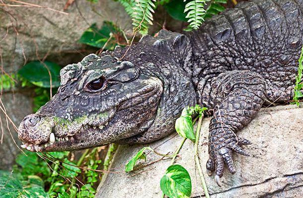 Черепа крокодилов изучили в российском СПбГУ при помощи компьютерной томографии