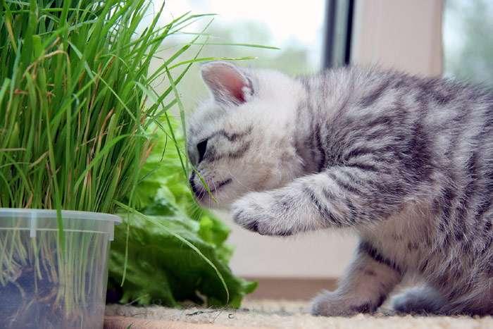 Лайфхак от МП: как спасти рассаду от кота