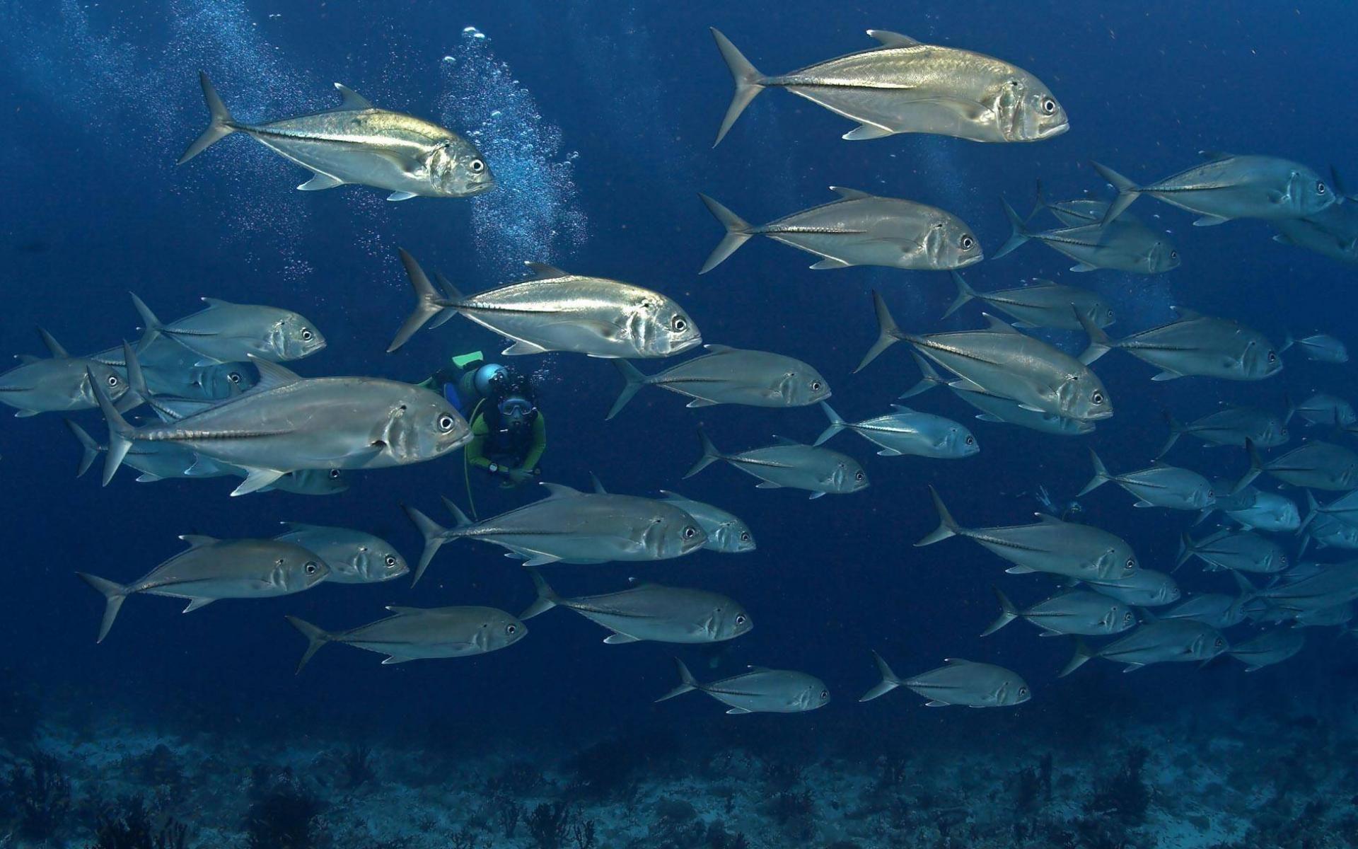 Current Biology: Рыбы различают цвета намного эффективнее людей