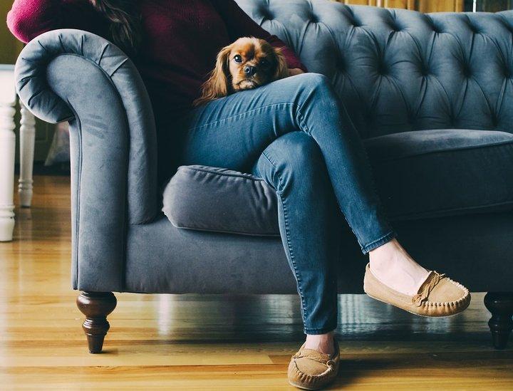 Учеными Университета Хельсинки составлен список наиболее агрессивных пород собак