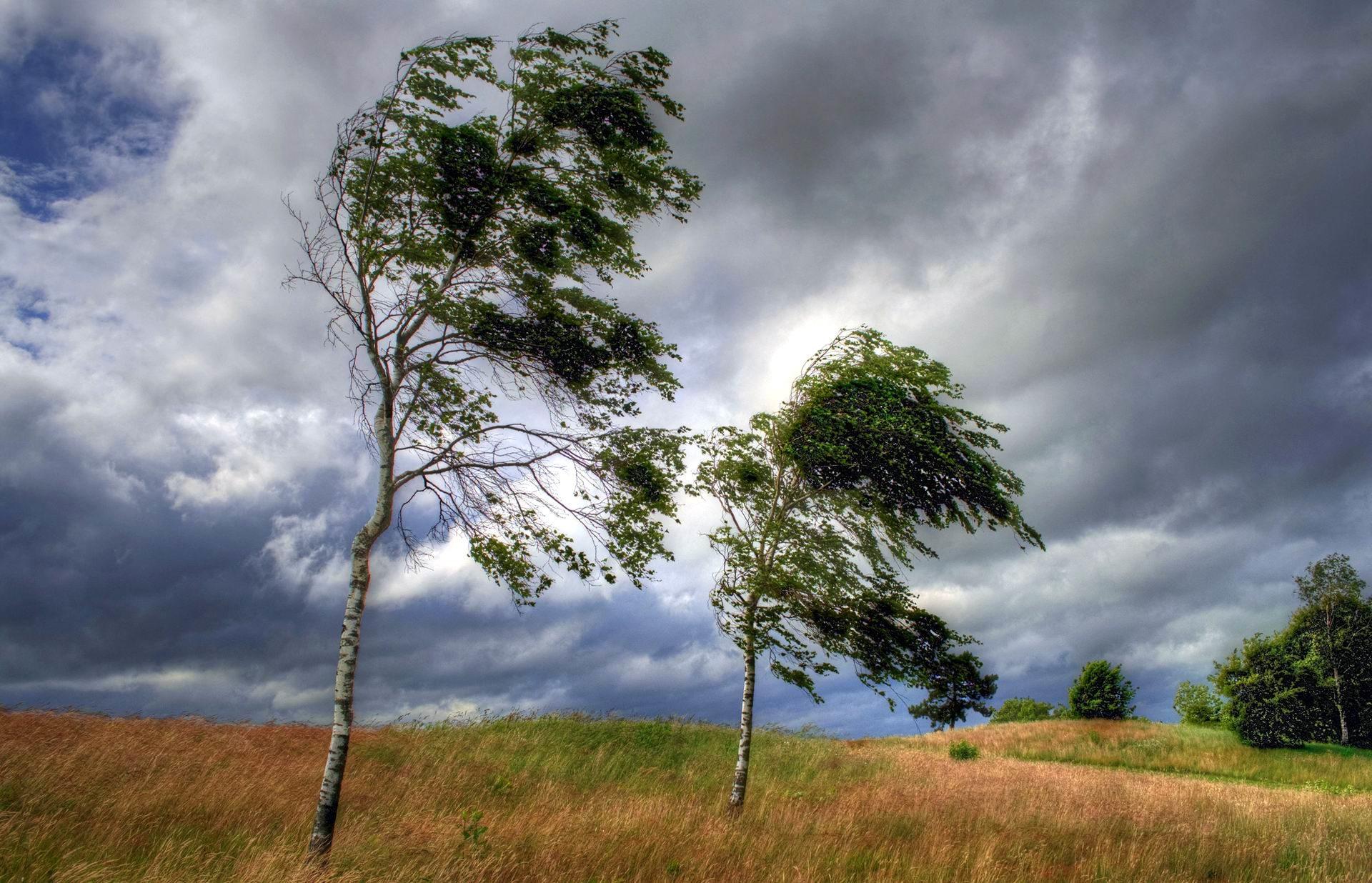 В Республике Марий Эл ожидается гроза и сильный ветер