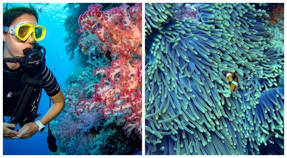Image result for кораллы восстановились