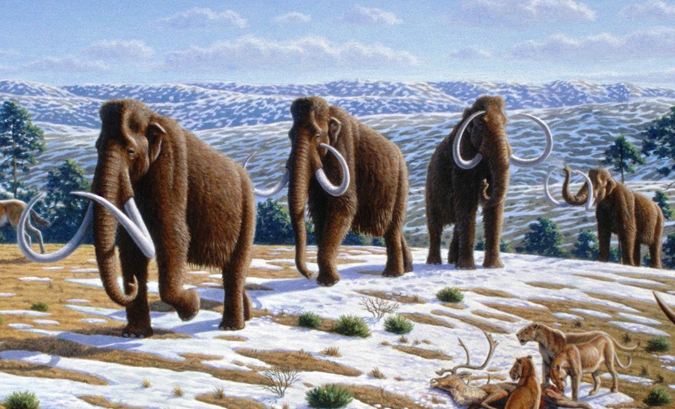 Science: Биографию древнего шерстистого мамонта установили по найденному бивню