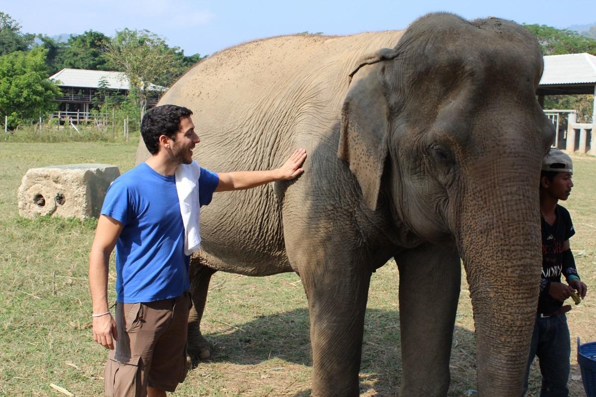 Слоны любят работать вместе только при избытке еды