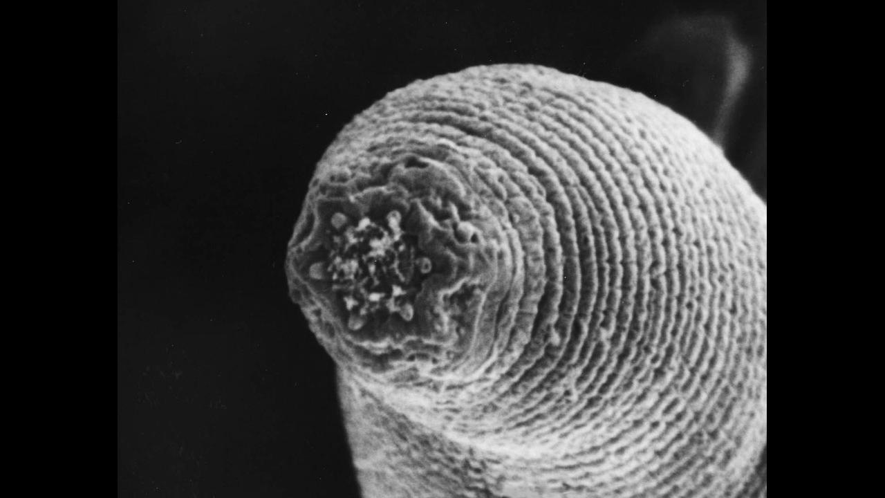 Ученые нашли следы жизни гигантского древнего червя на побережье Тайваня