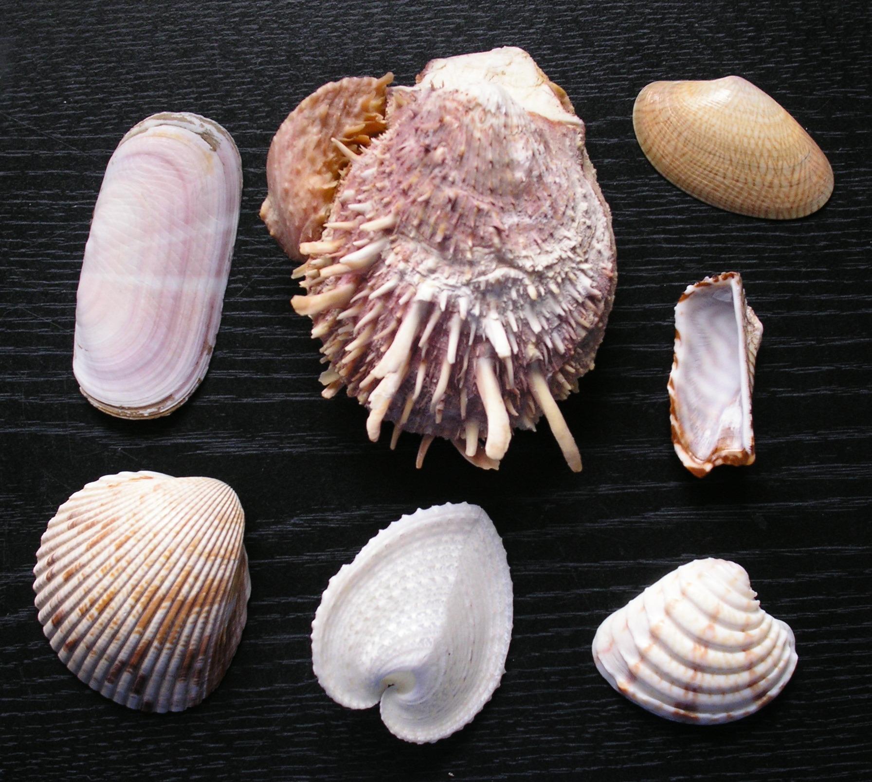 Исследование морского клея моллюсков поможет в модернизации хирургии и стоматологии