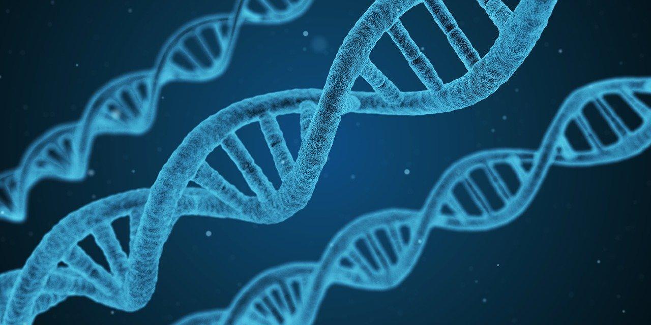 Ученые Университета Вирджинии открыли 14 генов, которые влияют на ожирение
