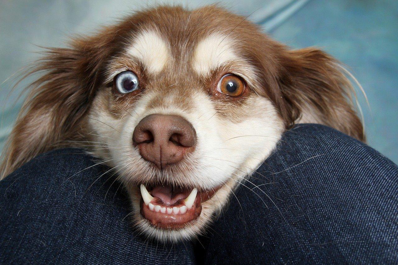 У собак есть способность определять намерения людей