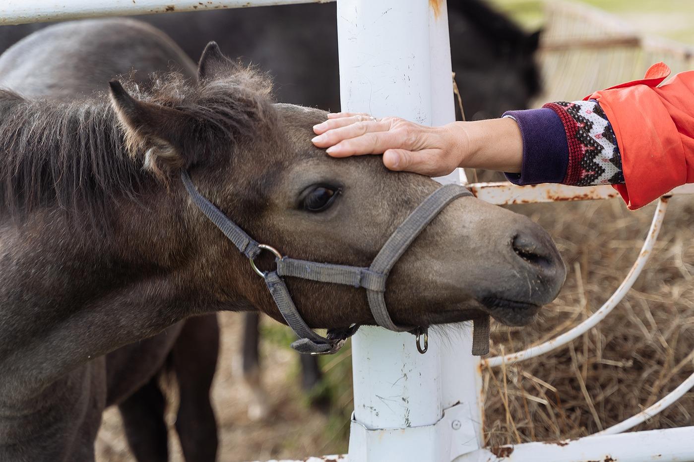 В Омской области раскопан курган с челюстями коров и лошадей