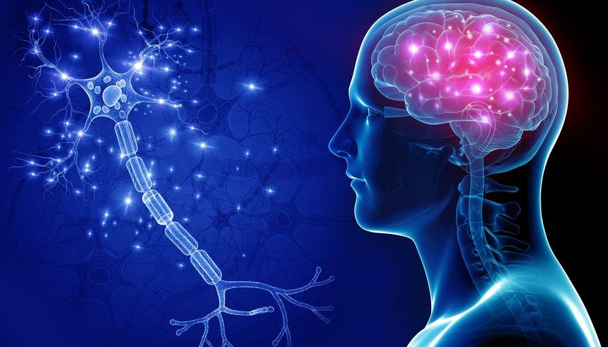 Ученые назвали отличительную особенность мозга религиозных людей