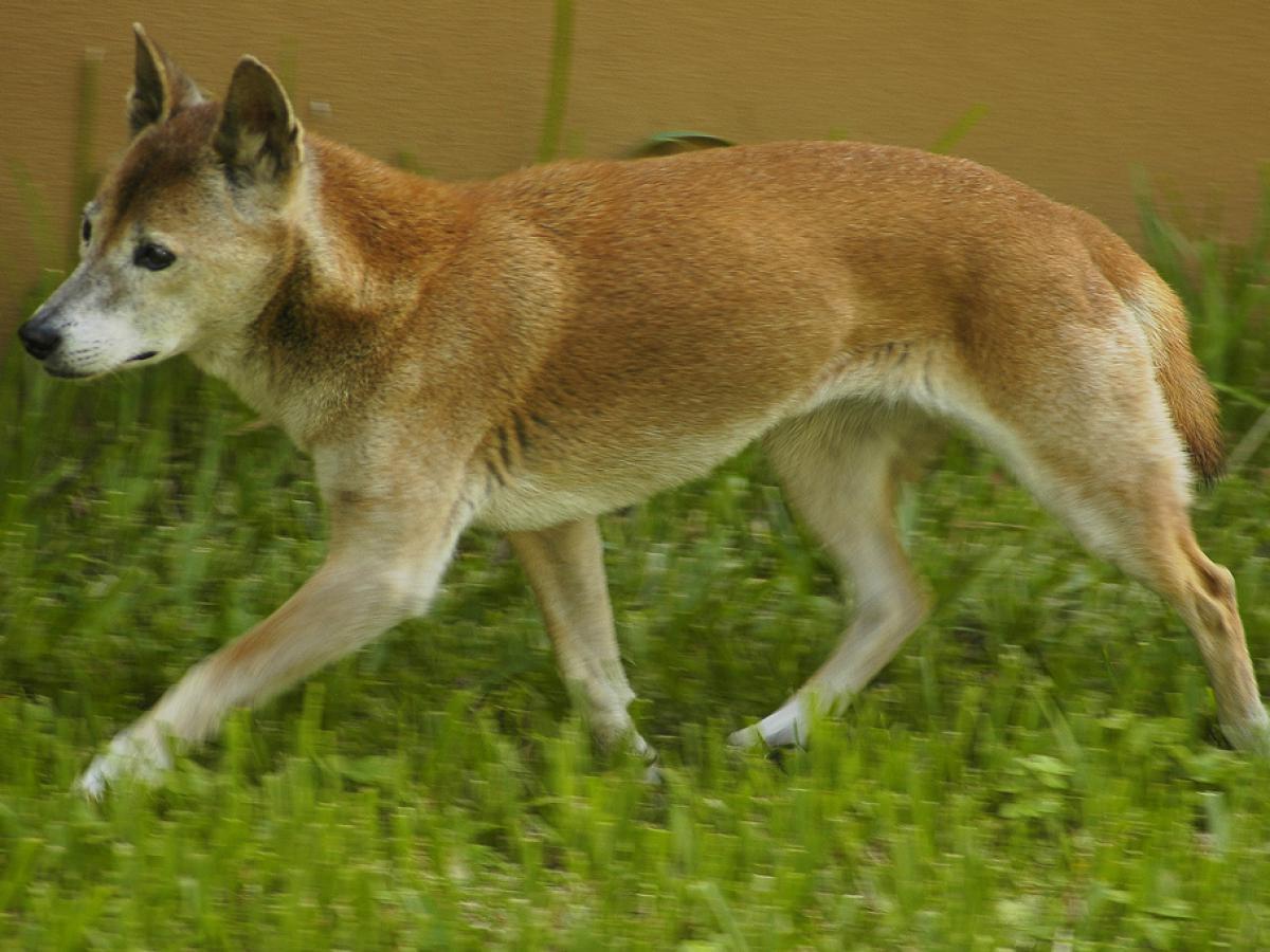В Коста-Рике найдены останки домашних собак возрастом 12 тысяч лет