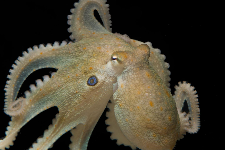 На Марианских островах найдены древние снасти для ловли осьминогов возрастом 3500 лет