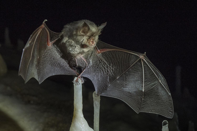 Мартин Хибберт: в Лаосе нашли летучих мышей с коронавирусом SARS-CoV-2