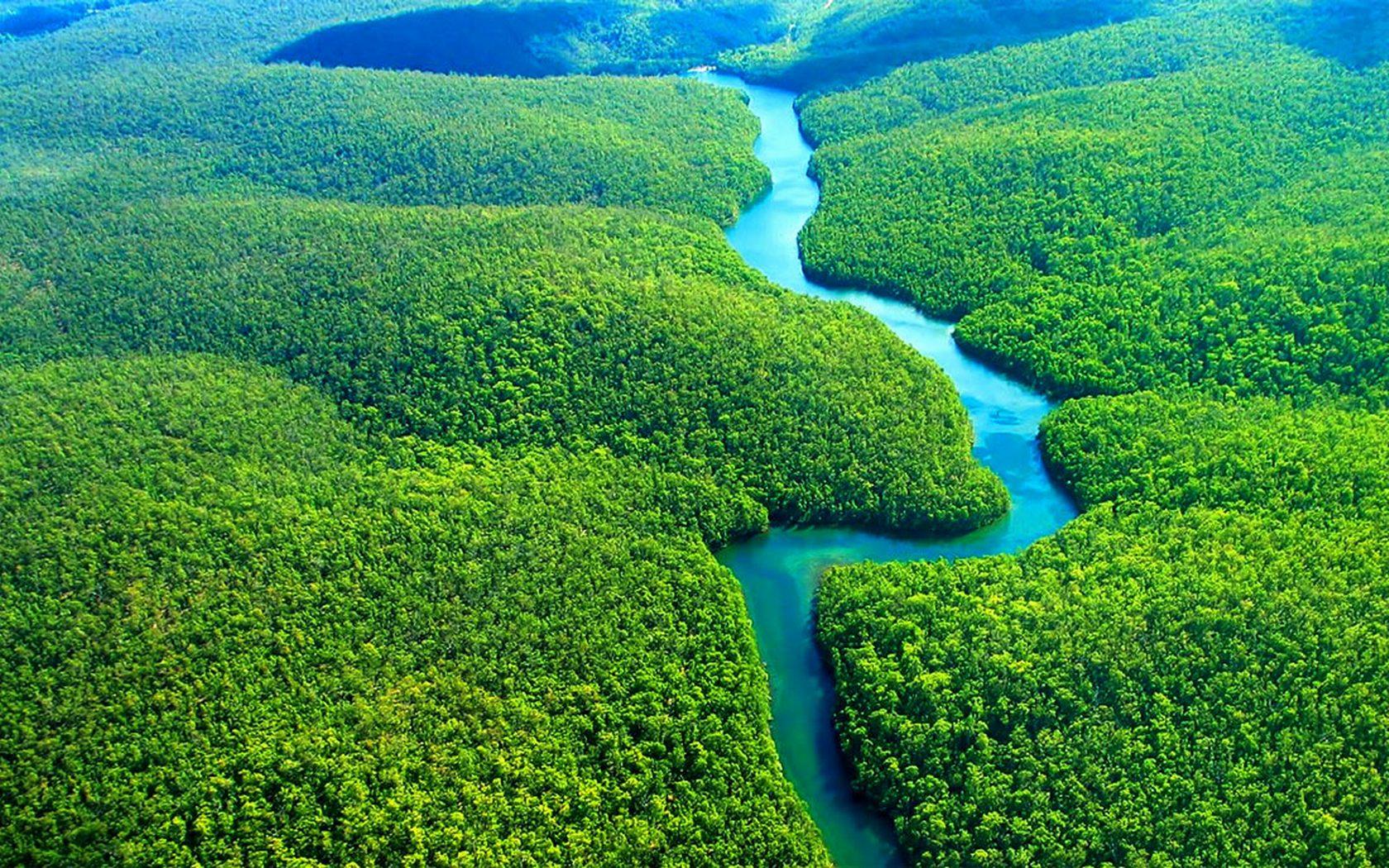 Леса Амазонии начали выделять больше углекислого газа, чем поглощать