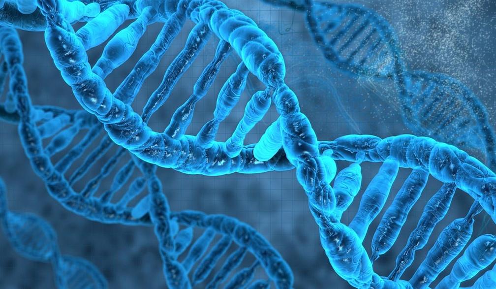 Science Advances: Ген роста помог людям справиться с пищевым стрессом