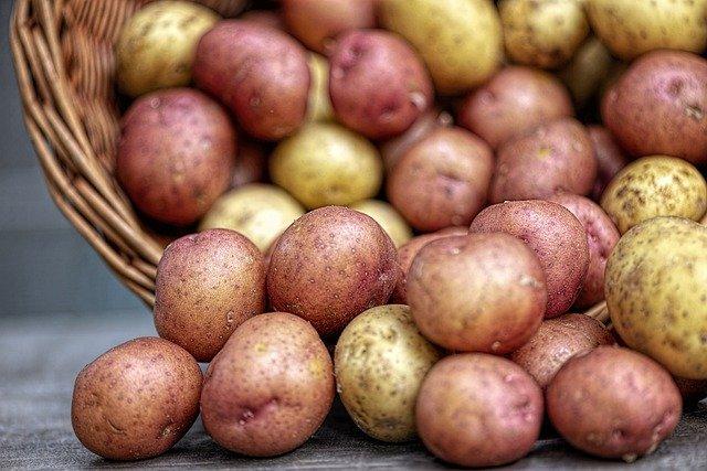 Экономист поддержала продажу в России неотсортированного картофеля