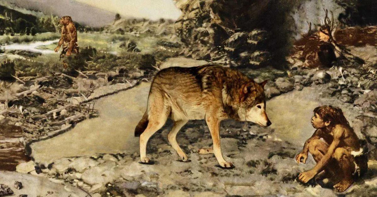Поселенцы Сибири могли впервые  вывести домашних собак около 23 тысяч лет
