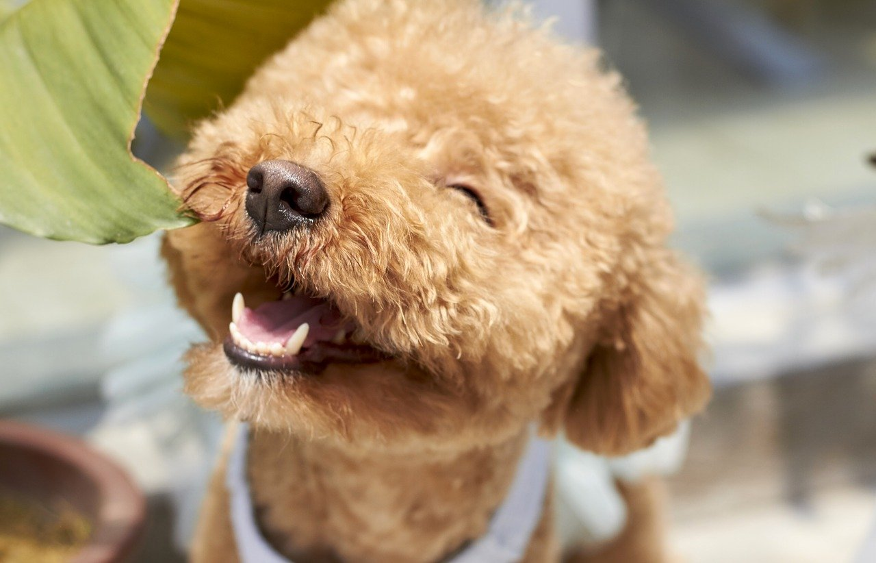 Ряд овощей в рационе собаки могут привести к смертельной болезни