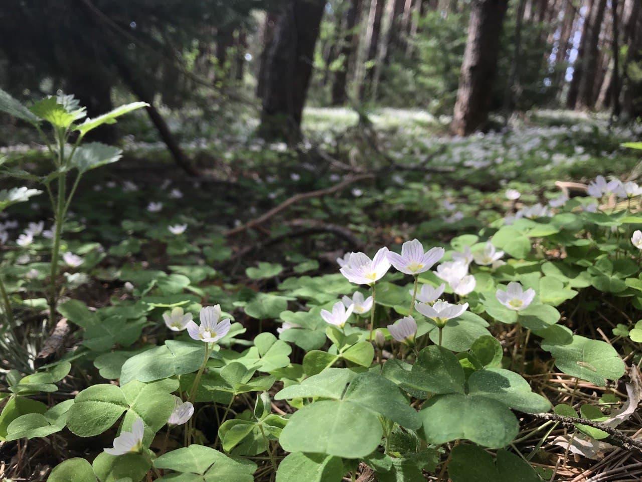 В лесах Марий Эл заблудились 223 человека в 2020 году