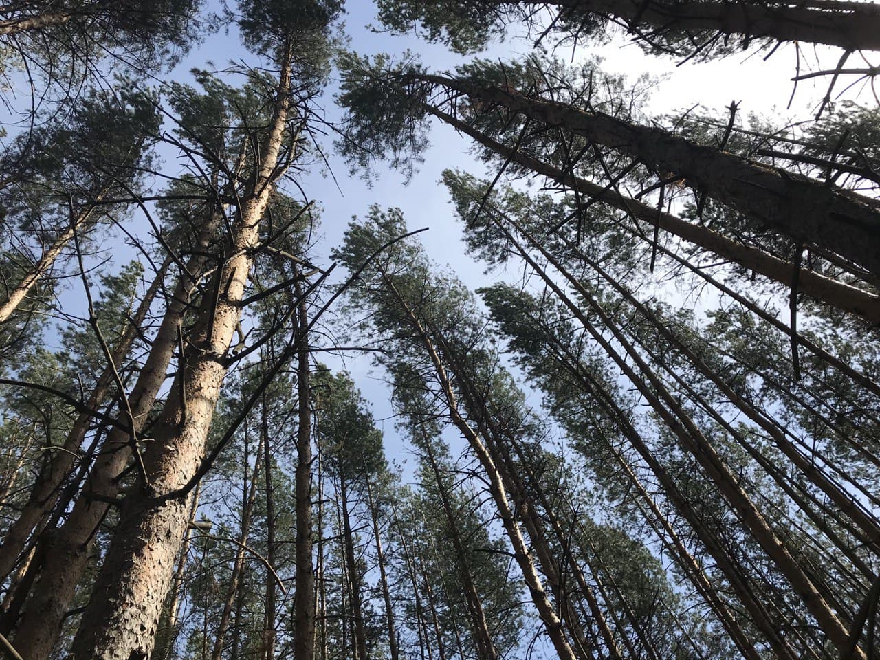 Boreas: ученые реконструировали изменения климата в Сибири за девять тысяч лет