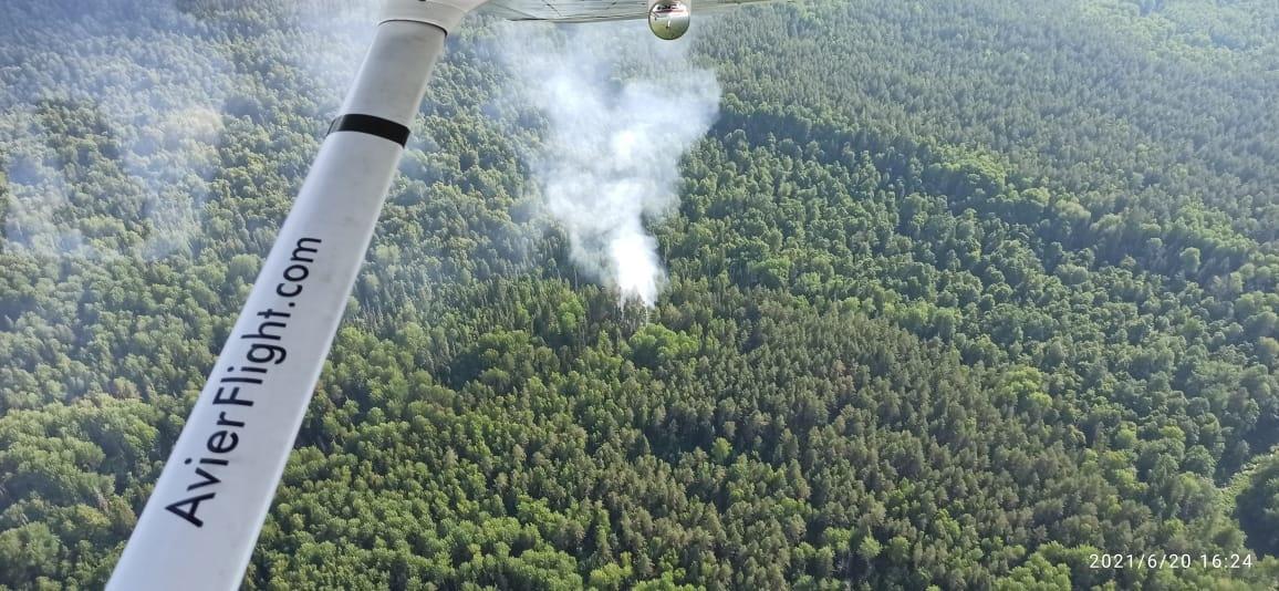 В Марий Эл в заповеднике «Большая Кокшага» произошел лесной пожар