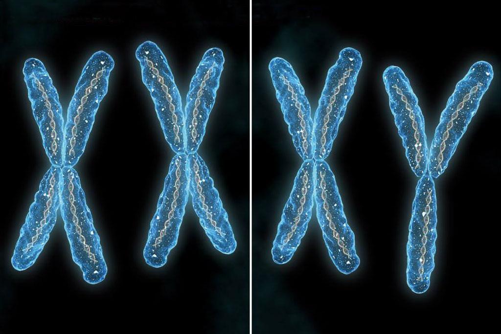 Учеными определена масса человеческой хромосомы