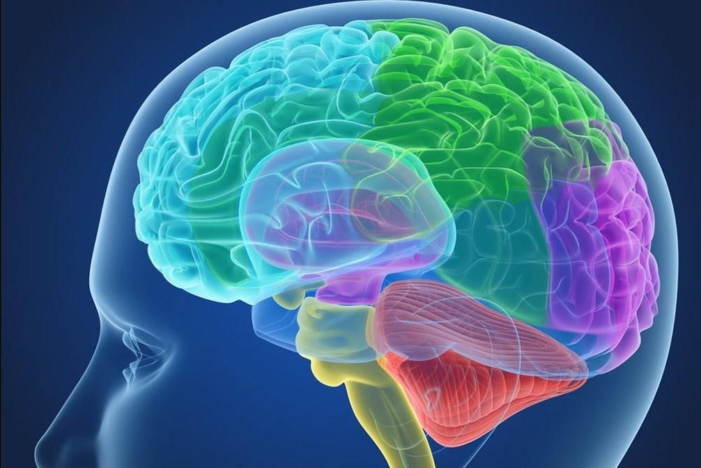 Neuroscience: Мозг человека способен полностью погружаться в прошлое