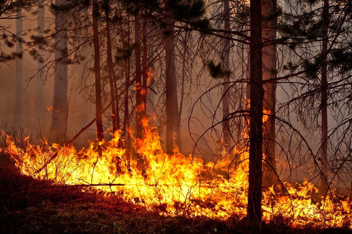 В Марий Эл на 20 июля произошло 55 лесных пожаров площадью 113 гектаров