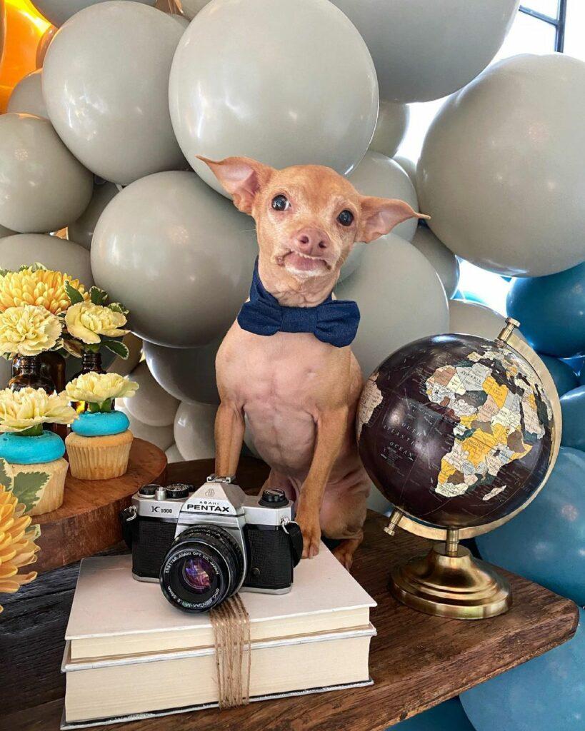 Журналисты перечислили самых популярных собак в Instagram
