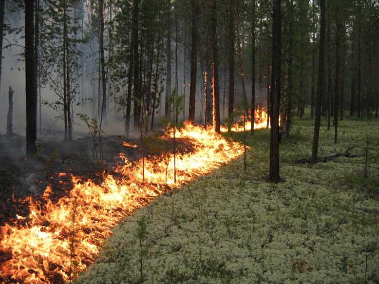 В лесах Марий Эл действует 4 класс пожароопасности
