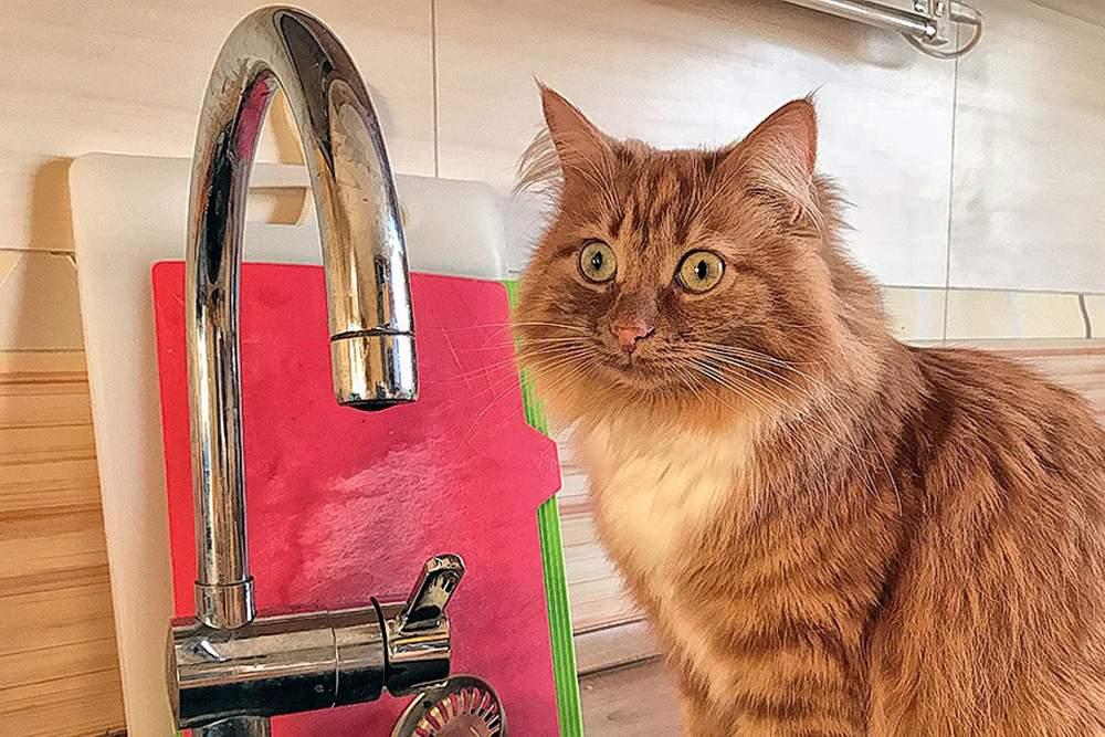 29 июля в Йошкар-Оле в 9 домах отключат холодную воду