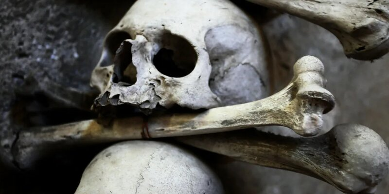 В Центральной Африке нашли 500-летние черепа людей с удаленными зубами