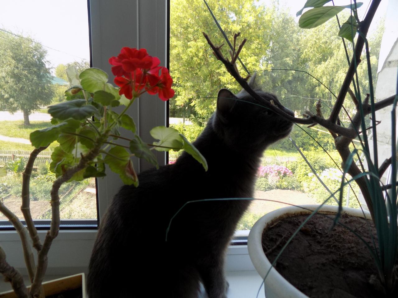 Ветеринар Лайонс рассказала, как кошки могут помочь в изучении генома человека