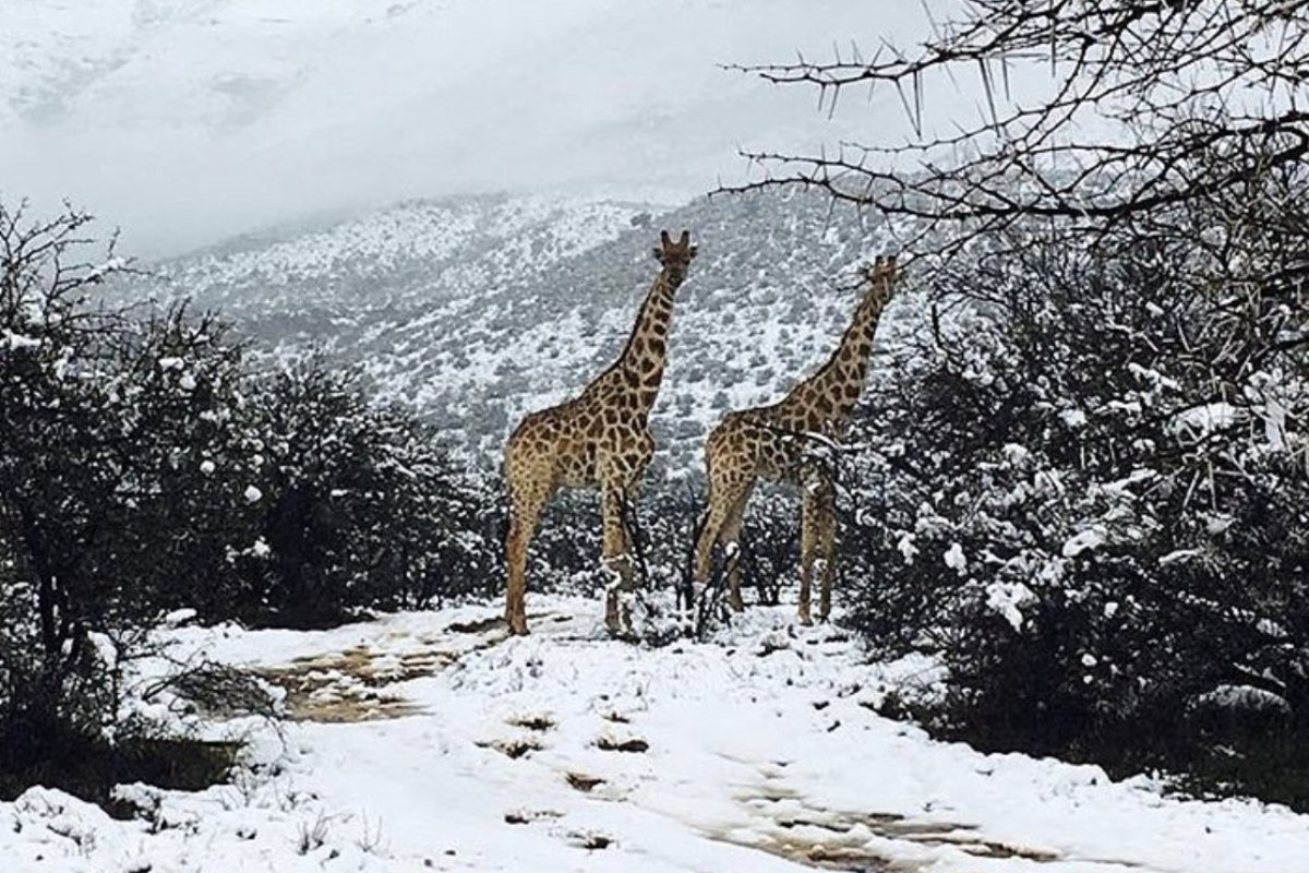Российский Климатолог назвал причины аномального мороза на юге Африки