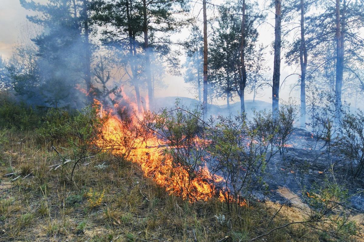В Марий Эл сохранится 4 класс пожароопасности лесов