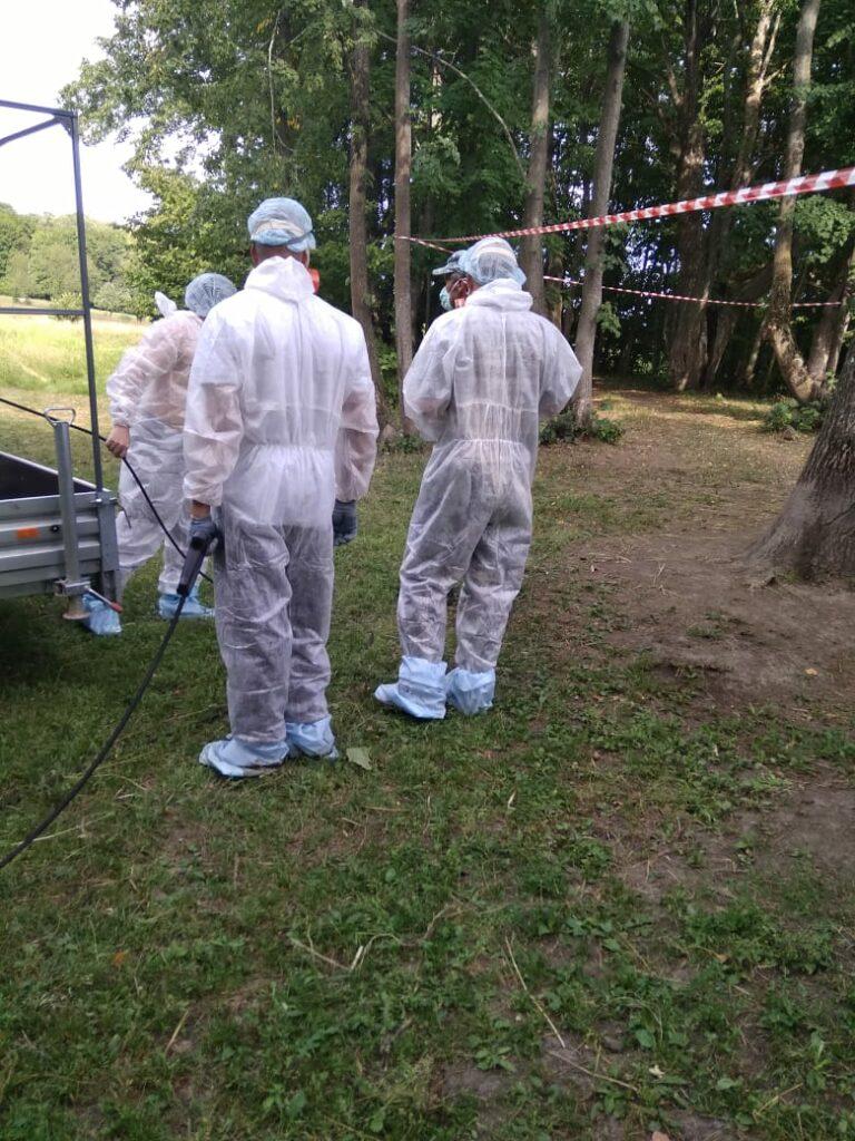Комитет ветеринарии прокомментировал ситуацию с африканской чумой свиней в Горномарийском районе