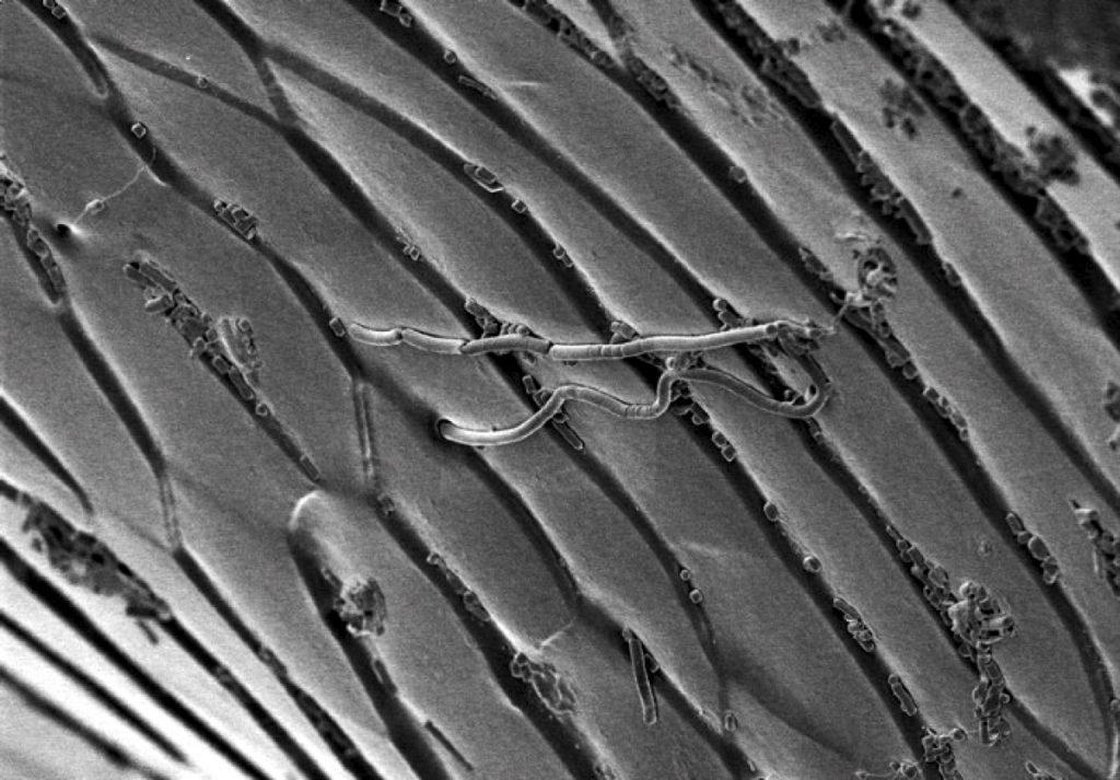 В лапках жуков Zophobas найден смазочный материал, работающий эффективнее тефлона