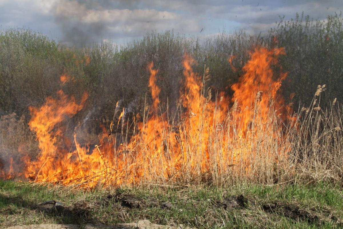 В Марий Эл действует особый противопожарный режим