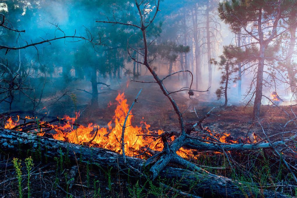 Особый противопожарный режим введут в Республике Марий Эл до 19 августа