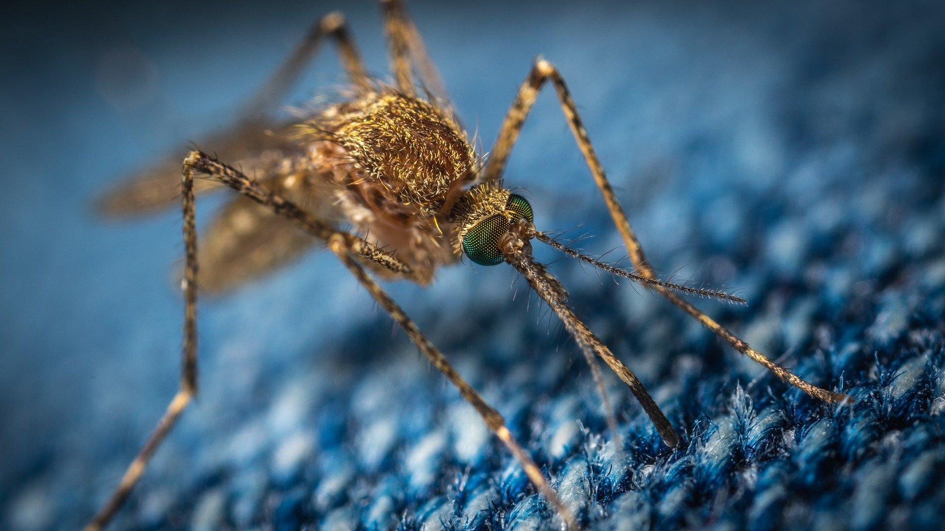 В США создана устойчивая к укусам комаров одежда