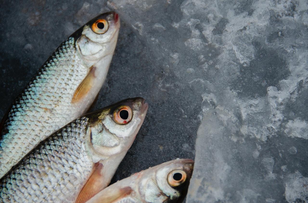 Агапкин и Гинзбург: Рыба снижает риск образования тромбов в крови человека
